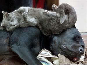 dog cat asleep